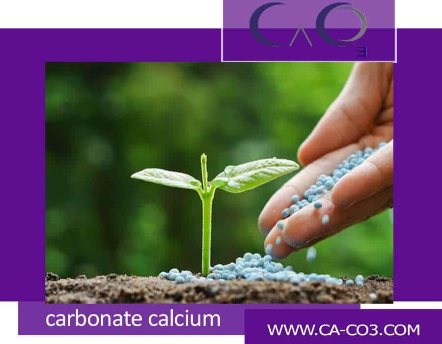 اهمیت کلسیم در رشد گیاهان