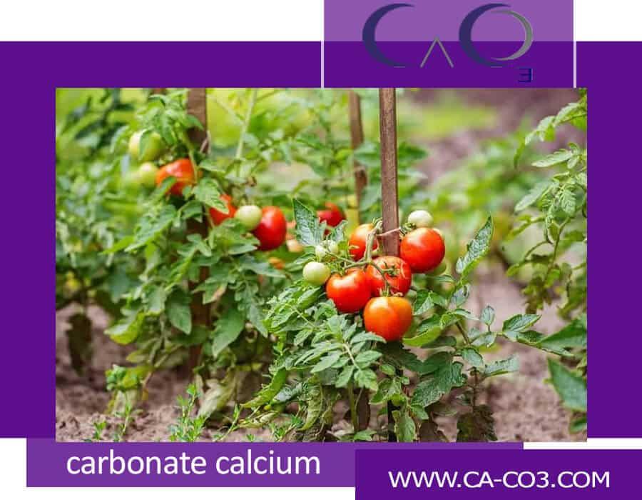 میزان استفاده کلسیم کربنات در گوجه فرنگی
