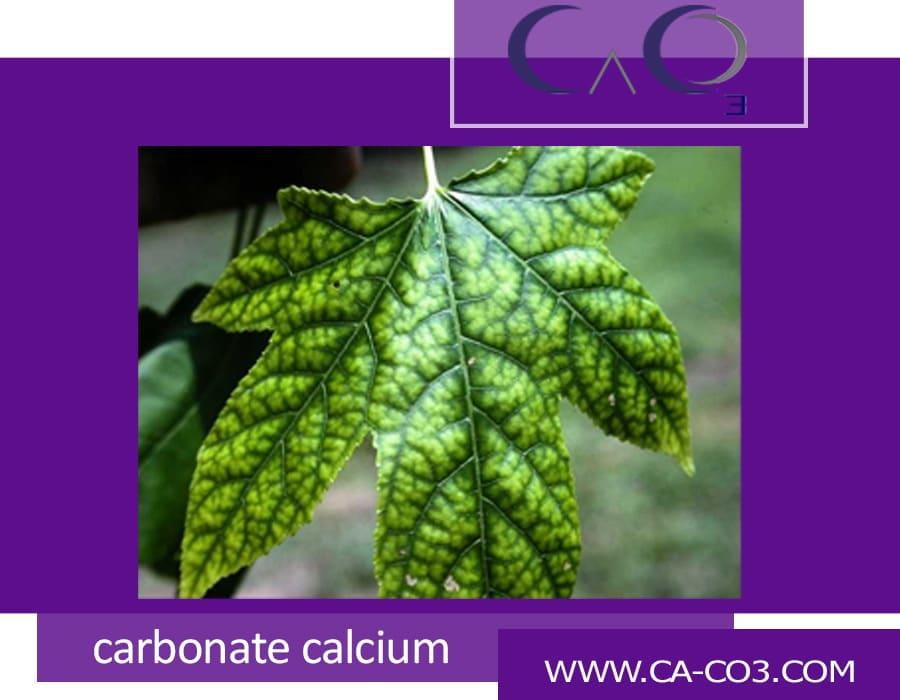آیا کربنات کلسیم جزء مواد گیاهی طبیعی است؟